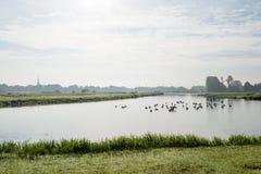 Liten flod tidigt på morgonen Fotografering för Bildbyråer