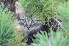 Liten fluffig kattunge i den trädgårds- närbilden Arkivbilder