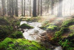 Liten forest. Woodland traversed by rays of light Royalty Free Stock Images