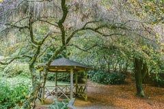 Liten gazebo på nationella rhododendronträdgårdar, Australien Royaltyfri Foto