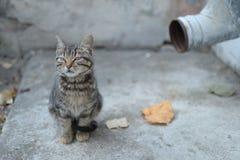 Liten grå färgsvart färgade katten nära den gamla avloppsrännan royaltyfri fotografi
