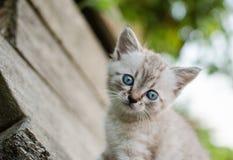 Liten grå katt som spelar i gården, på den wood bakgrunden, Royaltyfri Fotografi