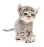 liten grå kattunge Royaltyfri Fotografi