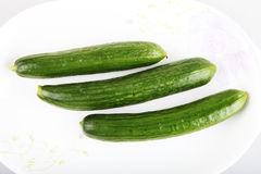 liten grön melon Royaltyfri Bild