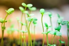 Liten grön planta Fotografering för Bildbyråer