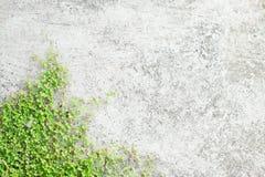 Liten grön växt på gammal betong Royaltyfri Fotografi