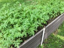 Liten grönsak i träasken Royaltyfri Fotografi
