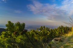 Liten gran och himmel Fotografering för Bildbyråer