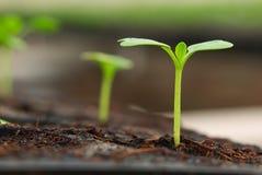 liten grodd för växt Arkivfoto