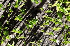 Liten groddlilja Royaltyfri Fotografi