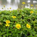 Liten gul stjärna Royaltyfria Foton