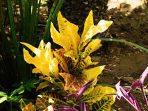 Liten gul växt Arkivfoton