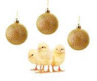 Liten guling blir rädd och guld- julbollar som isoleras på vit Royaltyfri Fotografi