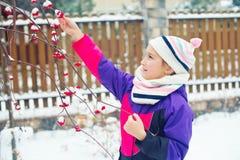 Liten gullig flicka som försöker att smaka röda bär under snö på träd Royaltyfria Bilder