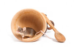 Liten gullig hungrig mus i en tom bunke Arkivfoton