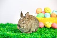 Liten gullig kanin med easter ägg Royaltyfri Foto