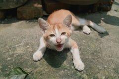 Liten gullig katt Fotografering för Bildbyråer