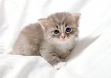 liten gullig kattunge Arkivbilder