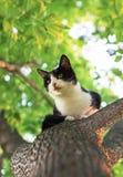 Liten gullig kattunge som högt sitter i ett träd och ser ner i a royaltyfria bilder