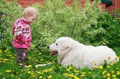 Liten gullig litet barnflicka som spelar med den stora vita herdehunden, se Arkivfoton