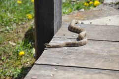 Liten gullig orm arkivbilder