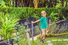 Liten gullig pojke i organisk bio grönsakträdgård royaltyfri fotografi