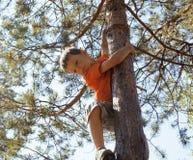 Liten gullig pojkeklättring på träd Arkivfoton