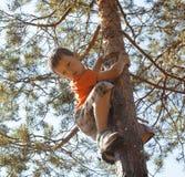 Liten gullig pojkeklättring på träd Arkivbild