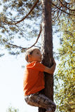 Liten gullig verklig pojkeklättring på trädhöjd, utomhus- livsstilbegrepp Royaltyfri Foto