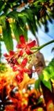 Liten härlig blomma royaltyfri foto