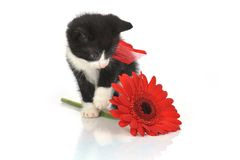 liten härlig kattunge Royaltyfri Fotografi