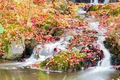 Liten härlig vattenfall på en mycket liten liten vik Royaltyfri Foto