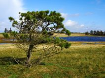 Liten härlig liten vik i en frodig grönområde Arkivbild