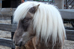 Liten häst Royaltyfria Foton