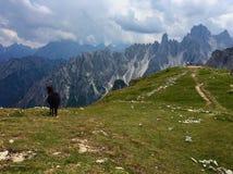Liten häst i Dolomites arkivbilder