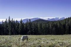 Liten häst på ett fält i bergen Arkivbilder
