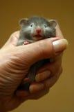 liten hamster arkivfoto