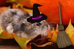 Liten hamster i häxahatten för halloween Arkivbild