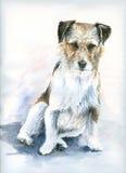 liten hund Royaltyfria Bilder