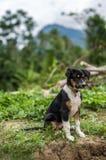 liten hund royaltyfri fotografi