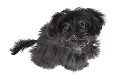 liten hund Arkivfoton