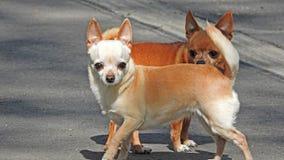 liten hund Fotografering för Bildbyråer