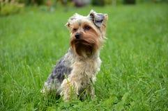 liten hund Arkivbild