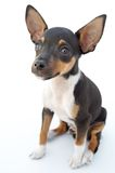 liten hund arkivbilder