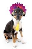 liten hund arkivfoto