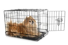 Liten hund i bur royaltyfria bilder