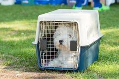 Liten hund i bur fotografering för bildbyråer