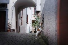 Liten hund i den gamla staden Ett husdjur i staden arkivfoto