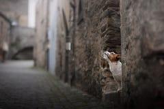 Liten hund i den gamla staden Ett husdjur i staden royaltyfri foto