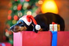 Liten hund i en Santa Claus hatt royaltyfria foton